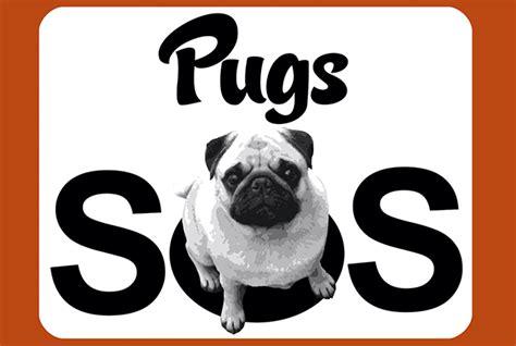 pugs sos home the pug diary