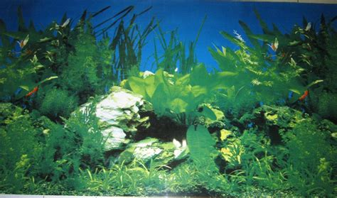 Aquarium Backgrounds Pictures Wallpaper Cave Backgrounds For Fish Tanks Printable Free