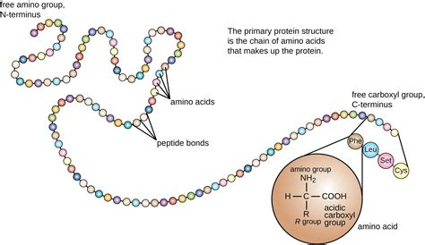 protein structure proteins microbiology