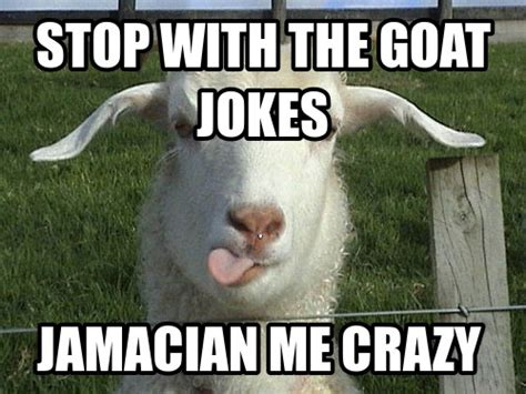 Funny Goat Memes - goat memes flickr photo sharing