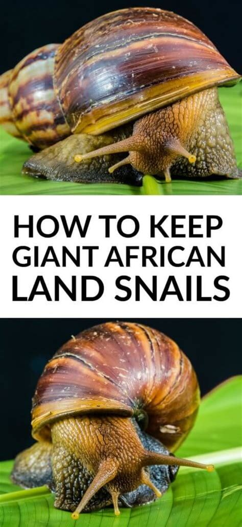 terrestrial snail pictures about animals 1000 ideas about animal boarding on pinterest white