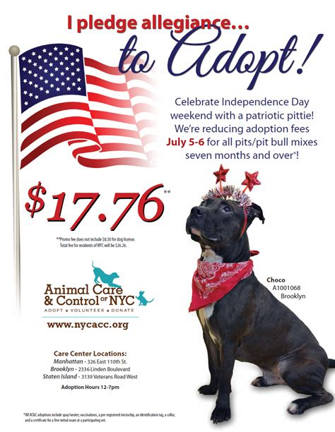 adoption events nyc nyc 4th of july weekend adoption event essentially dogs