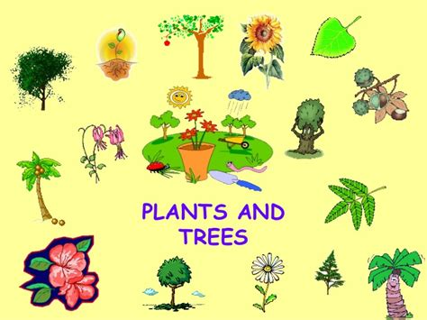 plants and trees