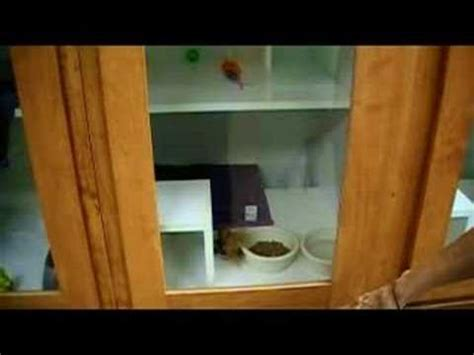 paws bed and biscuit paws n claws bed biscuit in odenville alabama youtube