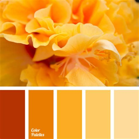 warm orange color color palette 1009