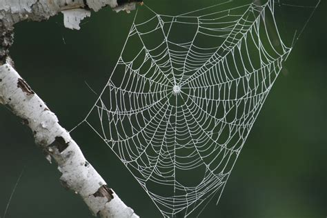 spiders web morning dew spider s web hilary currer yoga photography