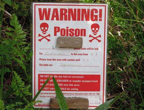 ate rat poison when dogs eat rat poison petcha