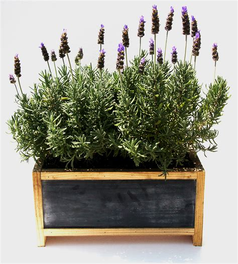 herb garden planter box 5 great wedding gifts for the home garden and patio