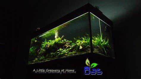 aquascape design kaskus bas aquascape design medan a little greenery at home