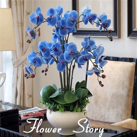 orchideen samen kaufen kaufen gro 223 handel seltene orchidee samen aus china