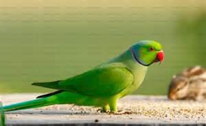parrot birds weneedfun
