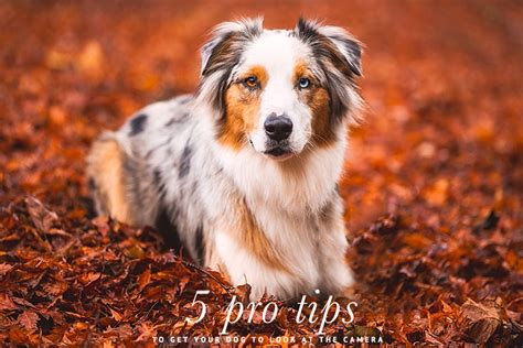 pet and photography for everybody secrets from a pro books pretty fluffy