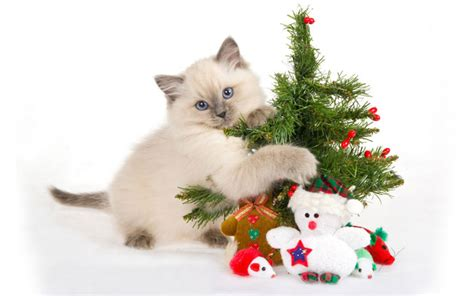 wallpaper cat christmas my top collection christmas cat wallpaper