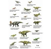 Different Types Dinosaurs