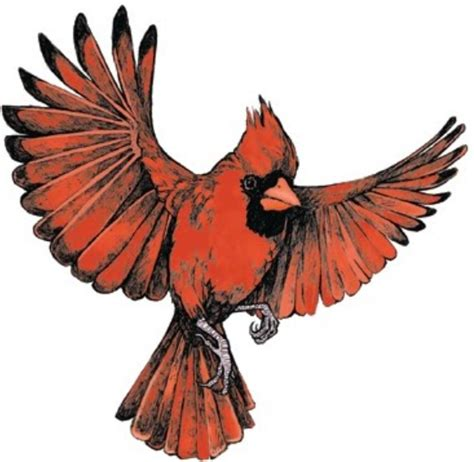 flying cardinal tattoo ideas pinterest cardinals