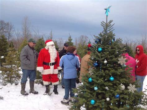 christmas tree growers association buffalo ny best tree farms to cut your own tree near buffalo