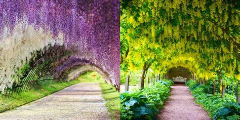 foto di fiori belli i tunnel di fiori pi 249 belli mondo