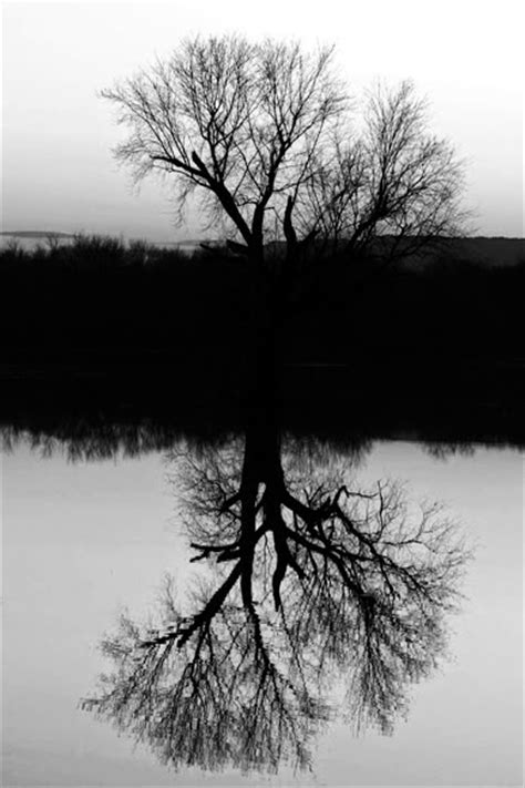 best of black and white photography best of black and white photography nature black and