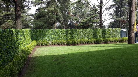 Morrone Interiors Backyard Fence Updated With Hedge Panels