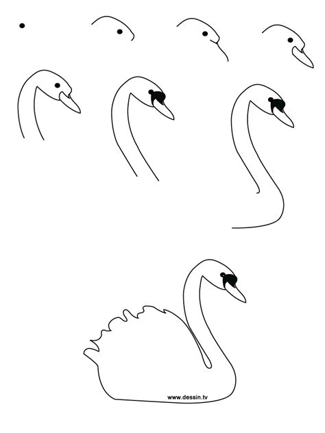 drawing birds learn to drawing realistic birds step by step learn how to draw a swan with simple step by step