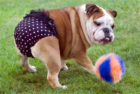 ub dogs dogs wearing need we say more huffpost