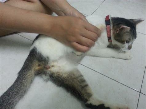 neutering a neutered cat