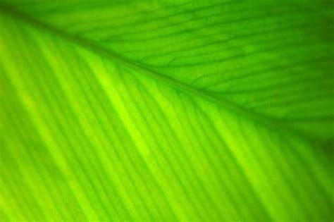 Imagenes Verdes Gratis | fondos verdes descargar fotos gratis