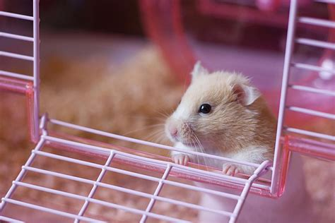 Storage Ideas For Bathroom by What Do Hamsters Need For Supplies Hamster Supplies