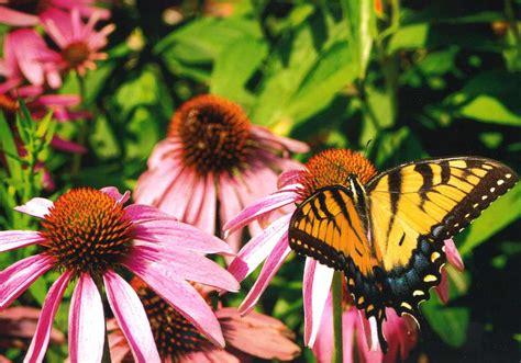 backyard conservation backyard conservation summit soil water