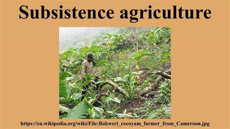 subsistence farming not way to go on diversification sen misau
