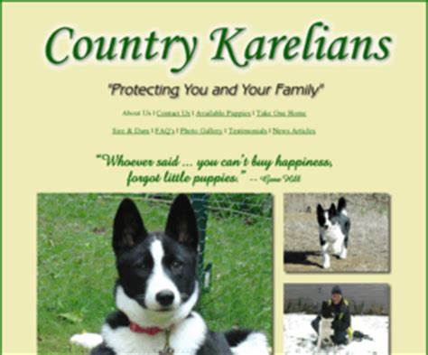 karelian for sale countrykarelians country karelians karelian dogs