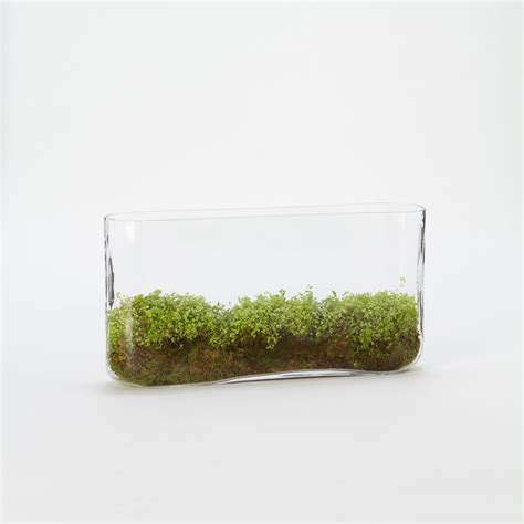 narrow rectangle planter indoor pots and