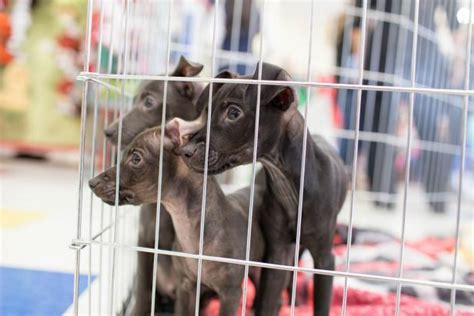 puppy care 101 puppy care tips diy network made remade diy