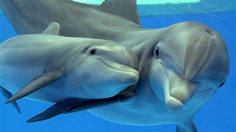 fast moving boats fast moving boats kill 2 baby dolphins