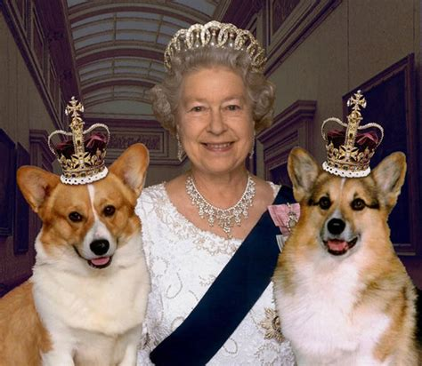 queen elizabeth ii corgis february 2014 for shame