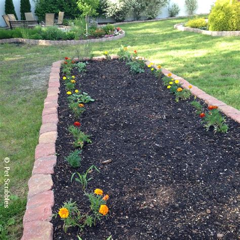 Marigolds In The Vegetable Garden Yes Live Creatively Marigolds In Vegetable Garden