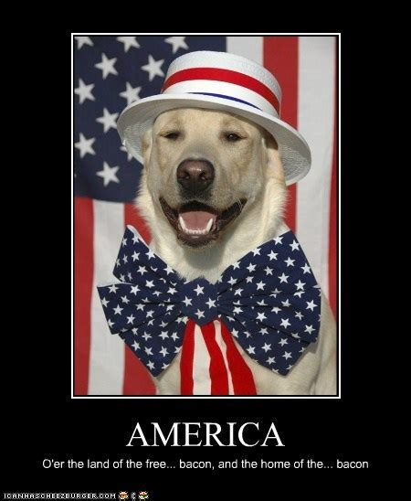 Funny 4th Of July Memes - i has a hotdog america rub mint