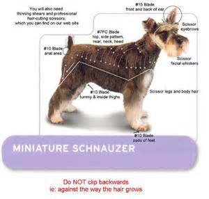 asian style schaunzer hair trim miniature schnauzer grooming car interior design