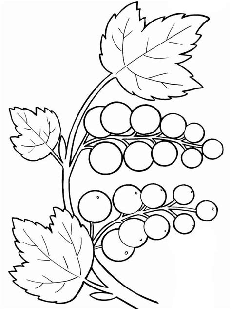 Grapes Coloring Pages To Print by Grape Coloring Pages And Print Grape Coloring Pages