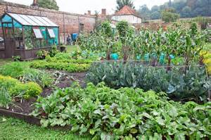starting a new vegetable patch gardenersworld com