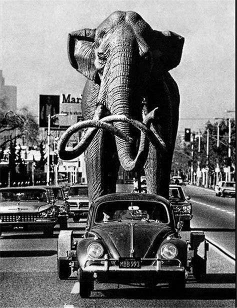 imagenes historicas impactantes 125 impactantes fotos para dar un viaje por la historia