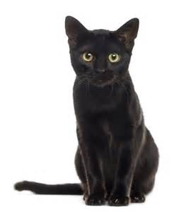 stop hating on black cats it s national black cat day