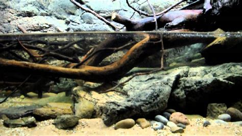 american aquascapes american aquascapes 28 images aquadesign the biotope