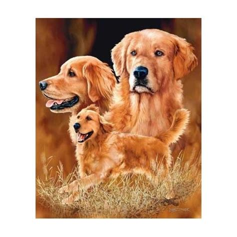 heaviest golden retriever 7 best golden retriever stuff images on