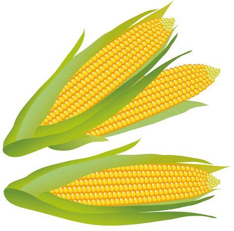vector clip vector clipart corn pencil and in color vector clipart corn