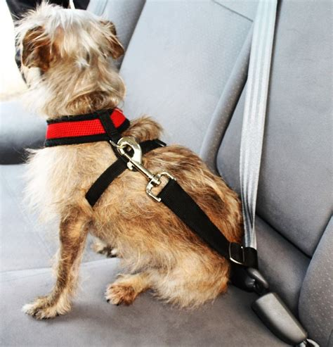 puppy seat belt doggie seatbelt easy seat belt for small dogs