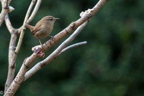wren and other small garden birds all creatures
