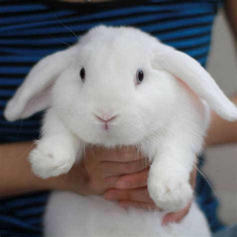Bunny White white bunny this is a bunny s world