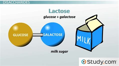 carbohydrates definition and importance lactose intolerance and the major disaccharides