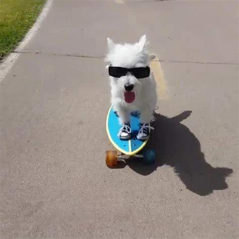 dog escapes backyard dog escapes backyard wearing gopro camera jukin media